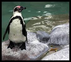 Penguin by blubbi