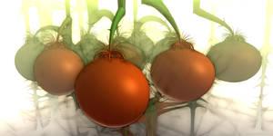 Tomaten by Bramvan