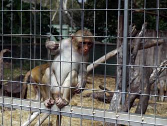 Monkey by Aximili-6116