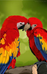 colorful Parrots by iamgraphik