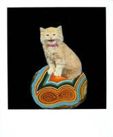 gatita cantando sobre un agata by VvVa