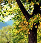 Nature's delight by meanonimAfA