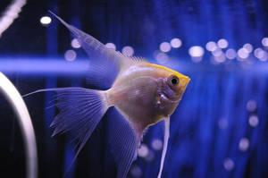 Fish by nikolazzz