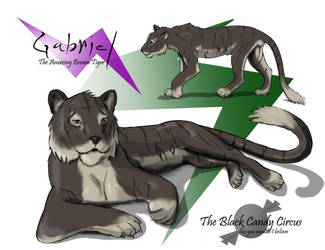 Gabriel the brown Tiger by Jeremy-Burner