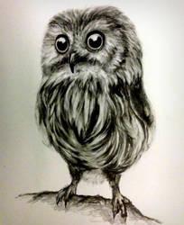 owl by kristina323