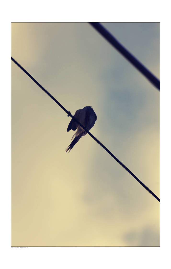 Birds by samurai-charger