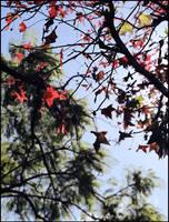 Seasons by samurai-charger
