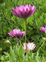 Purple Flowers by KelHemp