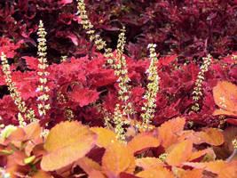 Fall Colors by KelHemp