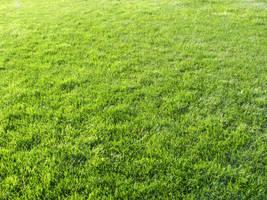 Grass Texture III by KelHemp