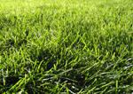 Grass Texture IV by KelHemp