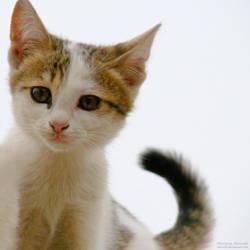 Hi Kitty by Sinior90