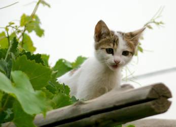 Hi Kitty 2 by Sinior90