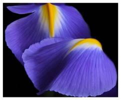 purple 2 by mzkate
