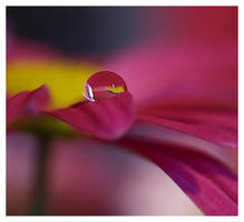 macro droplet 2 by mzkate