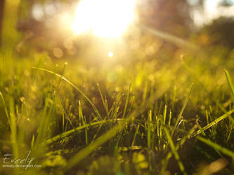 Grass at Sunset by Eveely