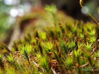 Moss in the forest by Eveely