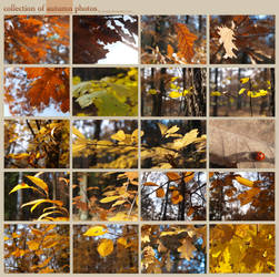 Autumn photos by Eveely