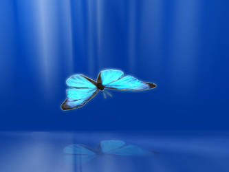 Butterfly by vittoor