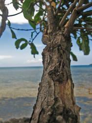 tree branch by rossiposse