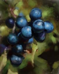Berries Study by Wildweasel339