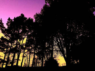 Sunset through the Trees by Lisa-Downing