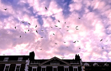 The Birds! by Lisa-Downing