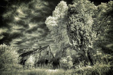 Tilted IR by Tadobi