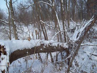 Snow 002 by AlnSue09