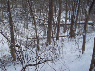 Snow 001 by AlnSue09