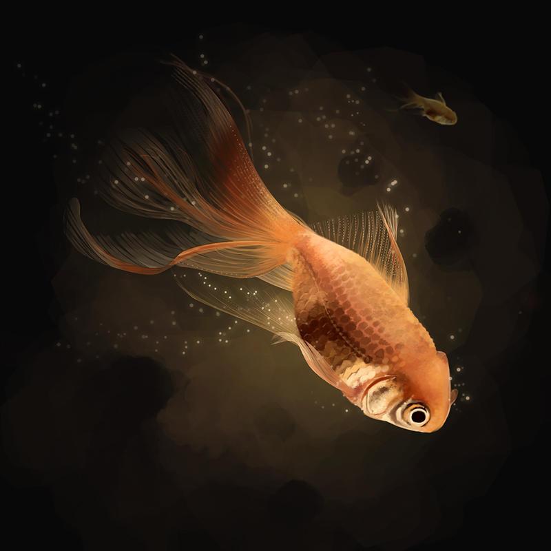 Goldfish by Anarki3000