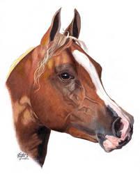 Arabian by LindseyTaylor