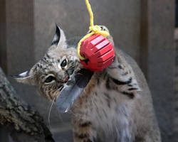 Cat Toy 2 by Jack-13