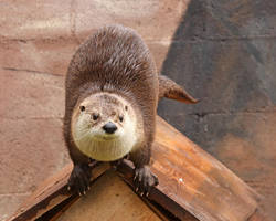 Otter on the Roof by Jack-13