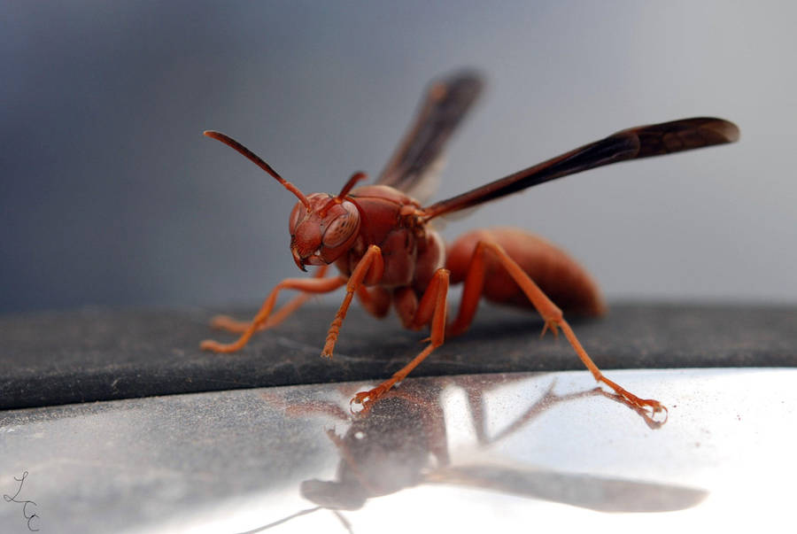 red wasp by themanofscience on deviantart