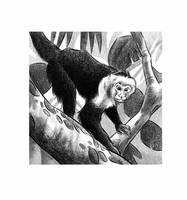 Monkey by JustinWyatt