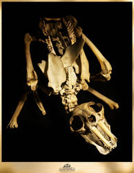 CHUPACABRA menbearpig's baby by WSi