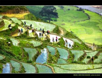 Begin a new rice season by kietdc