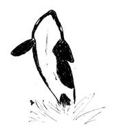 Orca doodle by TheDot16