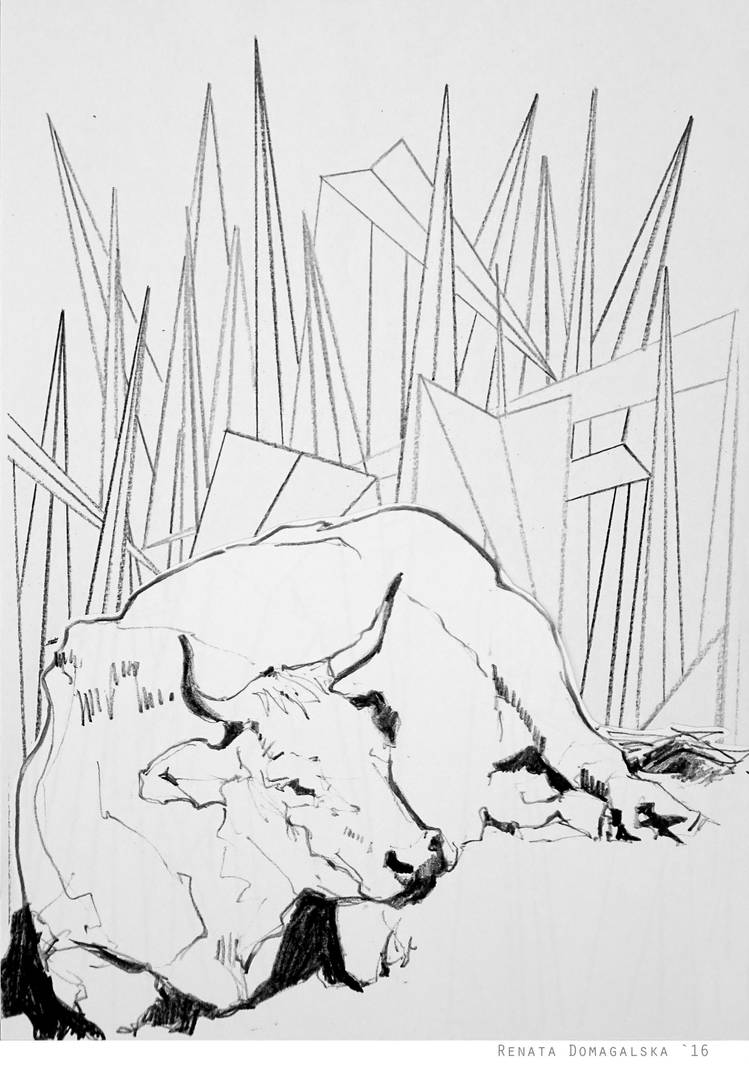 Cow 41-16 by renatadomagalska