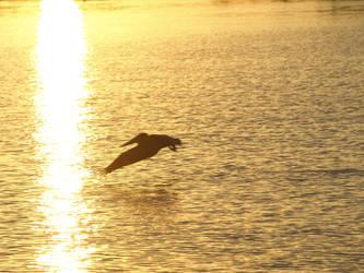 Pontchartrain Pelican by Kicks02
