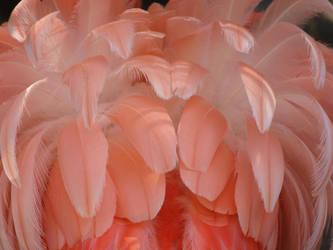 At the Zoo - Flamingo 2 by Kicks02