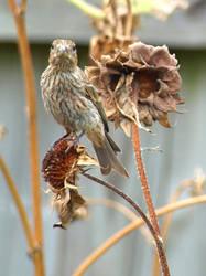 Backyard Birds 1 by Kicks02