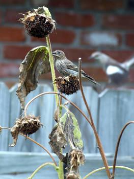 Backyard Birds 2 by Kicks02