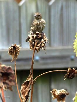 Backyard Birds 5 by Kicks02