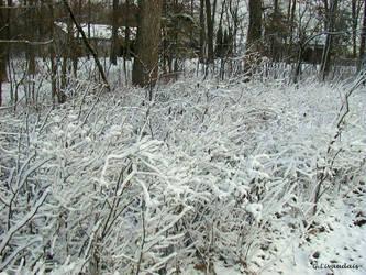 Thanksgiving 2004 - Iced Shrub by Kicks02