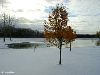 Thanksgiving 2004 - The Pond by Kicks02