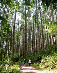 Guiellmot Cove - Tall Trees 1 by Kicks02