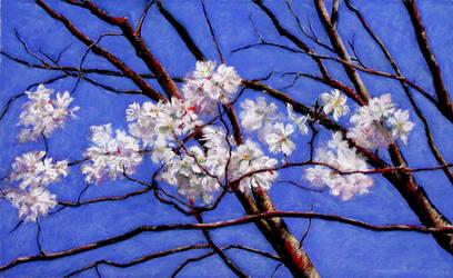 Cherry Tree by BRipin