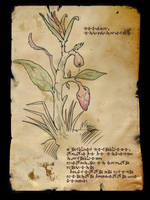 Arbor Mirabilis - Flora I by Demonrat